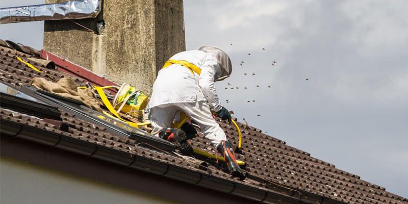 Bees Control in hyderabad