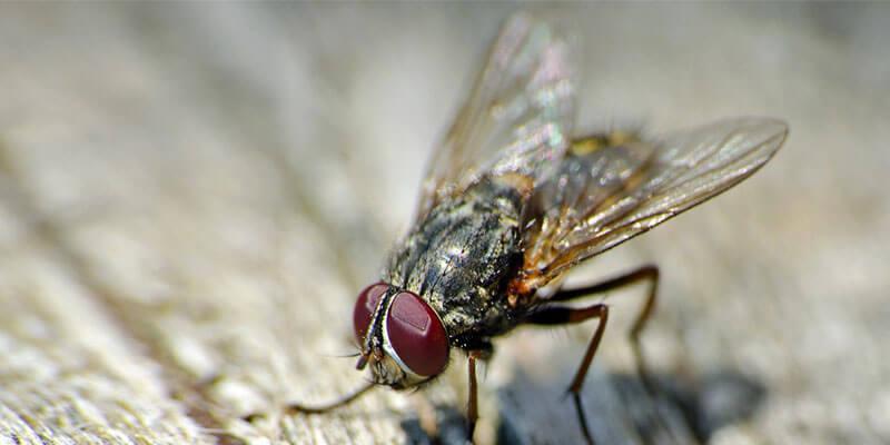 Flies control in hyderabad